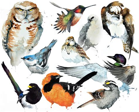 climate change  put   north american birds