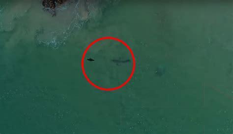 heres        shark eats