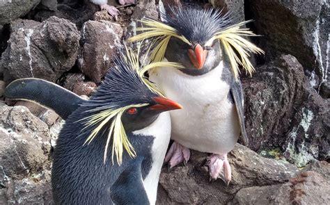 Protecting the Endangered Birds of Gough Island   Trimble