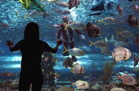 aquarium fish corals seized  manila pier
