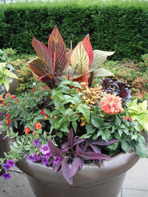 A Modern Tropical Patio Garden  Traditional Landscape
