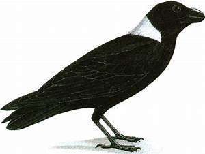 Crow Clip Art - Cliparts.co