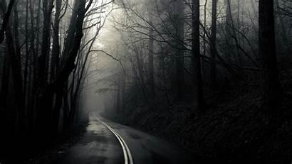 Dark Woods Backgrounds Wallpapers Background Pixelstalk