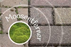 Moos Entfernen Hausmittel : moosentferner 9 nat rliche hausmittel zum entfernen von moos ~ A.2002-acura-tl-radio.info Haus und Dekorationen