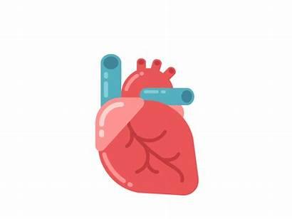Heart Human Cartoon Animation Anatomy Dribbble Beat