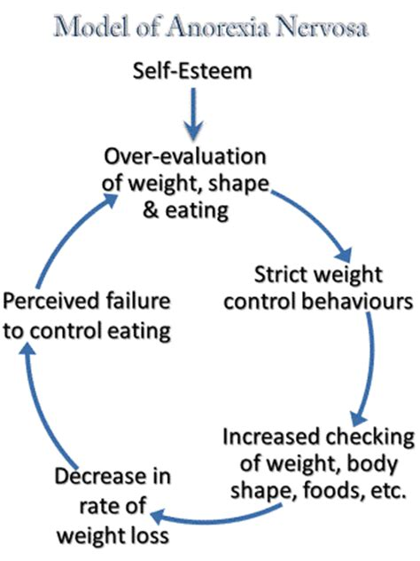 anorexia   eating disorder    individual