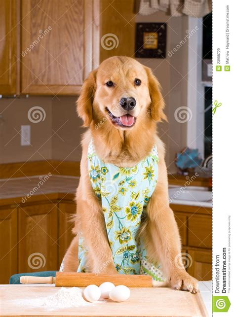cooking dog stock image image  homemade kitchen board