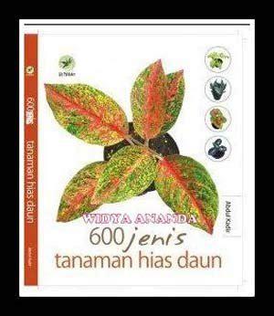 jual jenis tanaman hias daun lapak widya ananda