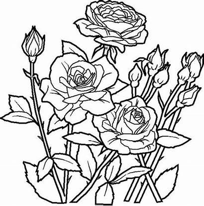 Coloring Flower Garden Rose Flowers Play