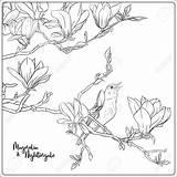 Magnolia Tree Branch Coloring Nightingale Adult Flowers Outline Drawing Illustrazione Illustrations Vectors Vettore Della Branches Sketch Ramo Sboccia Bota Riserva sketch template