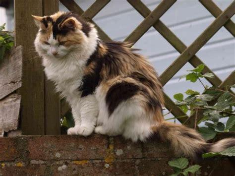 cat safe hgtv