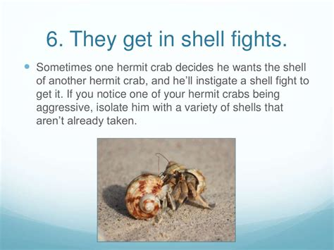 8 facts about hermit crabs 594 | slide 7 1024