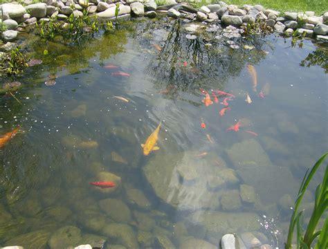 pond    garden  skip company