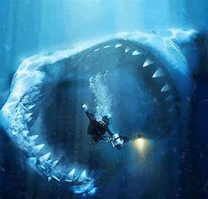 Eight Giant Shark Photos Explained » Epic Wildlife News ...