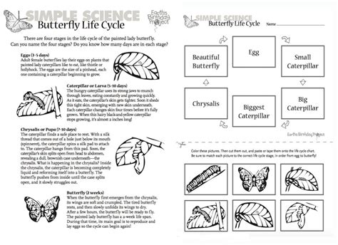 life cycle of a butterfly worksheets for 2nd grade the