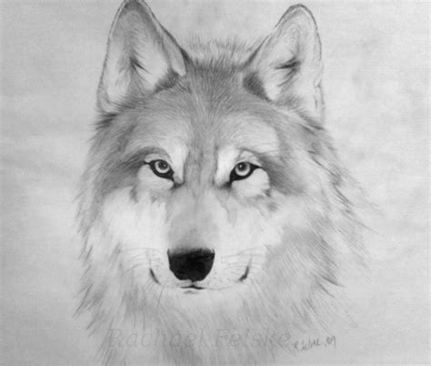 wolf drawings   clip art  clip art  clipart library