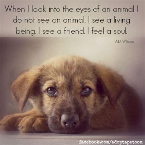 animal quotes ideas  pinterest inspirational