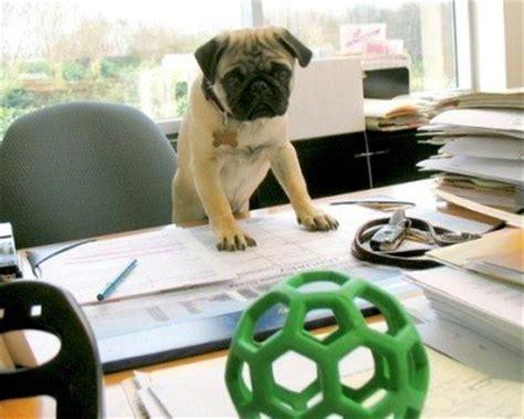 Lavora Con Noi Ufficio Sta - portare i cani sul posto di lavoro un sogno sta