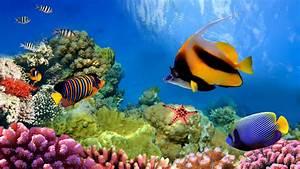 Great Barrier Reef Biosearch Life Under The Ocean Desktop