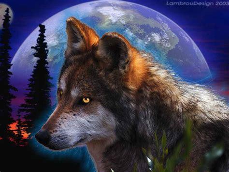 3d wolf wallpapers wallpapersafari