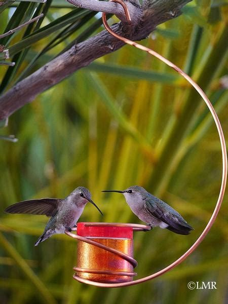 copper hummingbird feeder pro time lawn seed