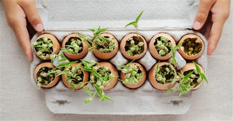 Definitely add your coffee grounds (and filters!) to your compost pile, where they will improve the nutrient content of your finished compost. 7 Ways to Feed Your Garden with Coffee Grounds and Eggshells | REthority