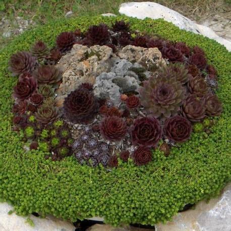vaso piante grasse piante grasse da esterno adatte in vaso 3 vivaio