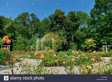 Botanischer Garten Berlin Rosengarten by Rosarium Stockfotos Rosarium Bilder Alamy