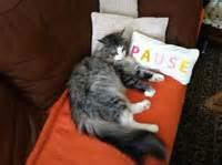 Katzenhaare Entfernen Kleidung : katzenhaare entfernen so bew ltigt man das chaos ~ Orissabook.com Haus und Dekorationen