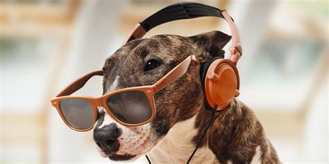 dogs love bob marley  research finds  force news