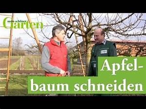 Kiefer Formschnitt Anleitung : gartentipp apfelbaum schneiden youtube ~ Eleganceandgraceweddings.com Haus und Dekorationen
