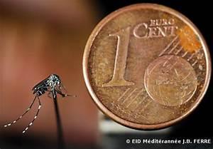 Qu Est Ce Qui Attire Les Moustiques : moustique tigre la progression s 39 acc l re ~ Voncanada.com Idées de Décoration