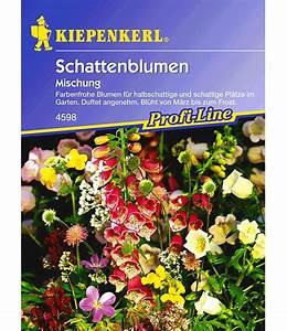 Sommerblumen Für Schatten : schattenblumen 39 mischung 39 weitere blumensamen bei baldur ~ Michelbontemps.com Haus und Dekorationen