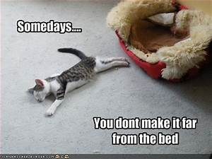 Funny cat pictures with quotes, funny cat picture, cat ...