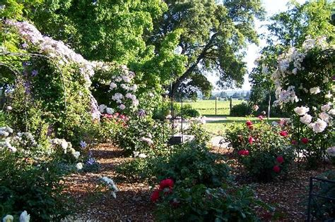 country gardens photos so beautiful picture of healdsburg country gardens healdsburg tripadvisor