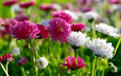 Flowers Natural Wallpapers Flower Nature Spring Super