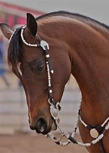 1000+ images about Horses on Pinterest | Dressage, Tack ...
