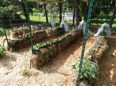 hay bale gardening joel karsten s tips will help you become a straw bale