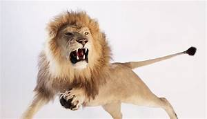 leaping lion Quotes