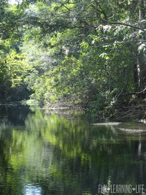 Wakulla Springs Boat Tour by 10 Gorgeous Photos From A River Boat Ride At Wakulla