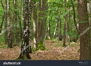 Undergrowth Forest Near Paris Stock Photo 212753647