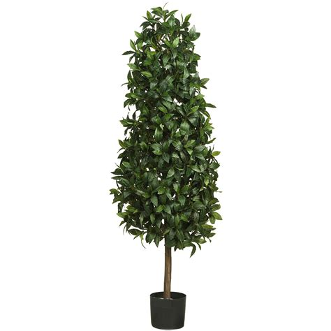 5 foot sweet bay pyramid topiary potted 5243 nearly