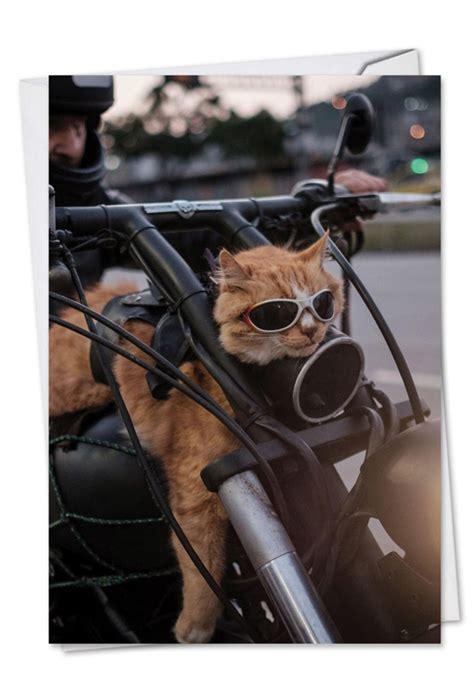 cat biker birthday funny greeting card