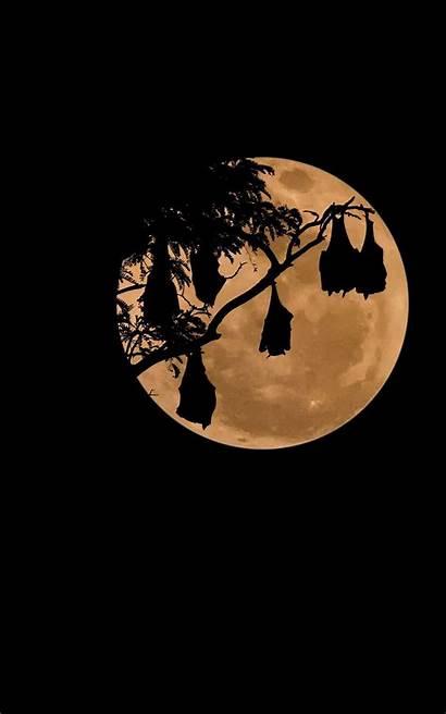 Px Display Maan Nvidia Wallpapersafari Bats Moon