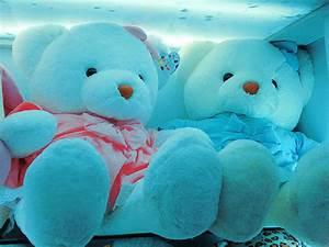 Cute Teddy Bear Pictures – WeNeedFun