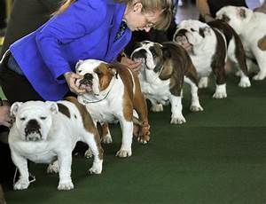 dogs take the stage at the 138th westminster kennel club With show me dog kennels