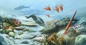 Paleozoic Era: Facts & Information  Silurian