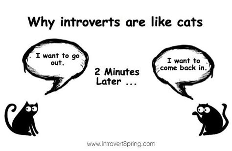 Introvert Memes - introvert cat meme why introverts are like cats introverts pinterest introvert personality