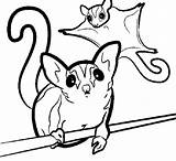 Sugar Coloring Glider Pages Petcha Designlooter Critters Pet Colouring Gliders Supplies 34kb 654px Printable Food sketch template