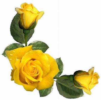 Roses Yellow Clipart Rose Flower Border Clip